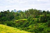image of tropical island  - tropical jungle on the island of Bali Indonesia - JPG