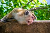 foto of marmosets  - Photo of the monkey bare it - JPG