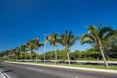 stock photo of caribbean  - Caribbean street road with palm trees, caribbean