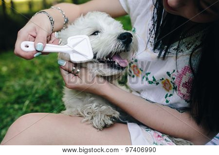 Girl combing her small dog