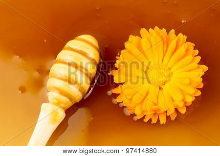 Wooden Drizzler On Background Fresh Sweet Honey And Flowers, Macro