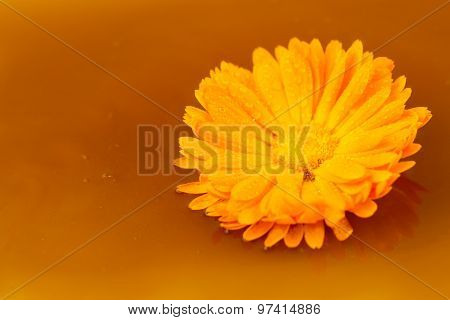 Beautiful Flower On A Background Of Fresh Sweet Honey