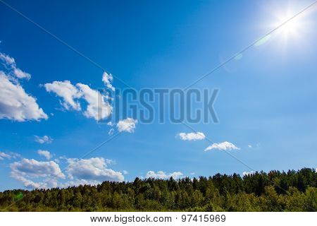 Blue Sky Under The Forest