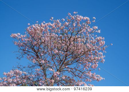 Pink flower against a blue sky background.