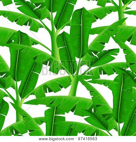 Green Tropical Palm Trees In A Seamless Pattern On White Background