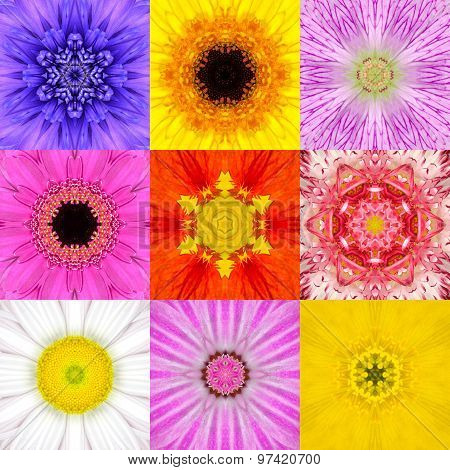 Collection Set Nine Flower Mandalas Various Colors Kaleidoscope