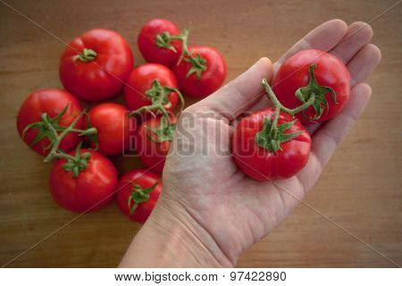 Homegrown organic tomatoes in the hand