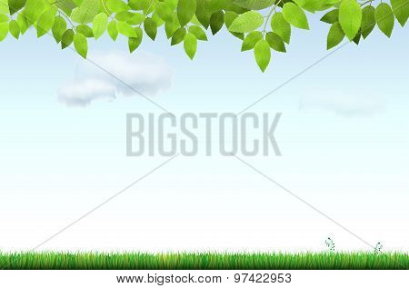 Grass, Tree Branch And Sky With Clouds