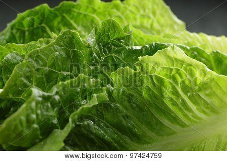 fresh romain green salad close up