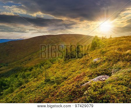 Stones And Conifer Trees On Hillside At Sunset
