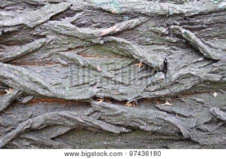 surface texture of tree bark
