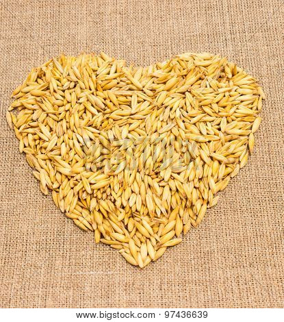 Grain Oats On Canvas
