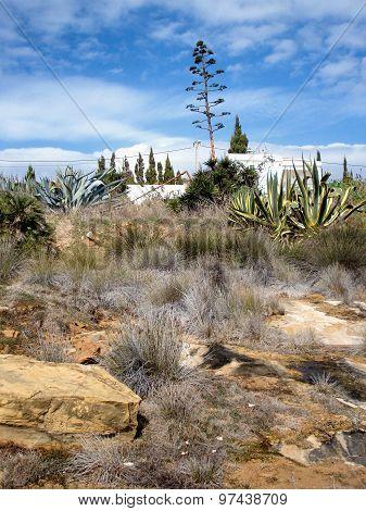 Vegetation Slope In Algarve, Portugal