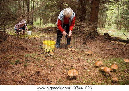 Gone mushrooming