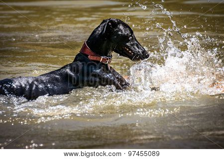 Dog Playing With Water In A Lake