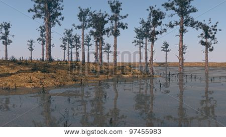 shore landscape with firs
