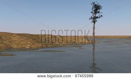 shore landscape with lonely fir