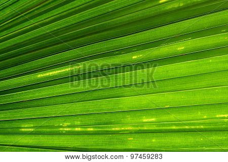 Green Palm leaf line abstract nature background