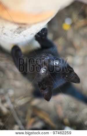 Black cute kitten climbs on a tree