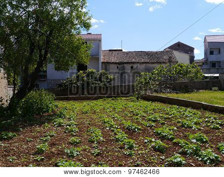A kitchen garden on the Croatian island Murter
