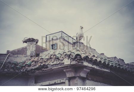 Seagull On Moroccan Building
