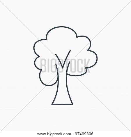 Maple tree icon. Forest wood sign.