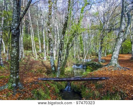 Creek With Leaves In Bright Color In The Forest At  Geres