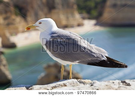 Seagull standing on the top of a cliff