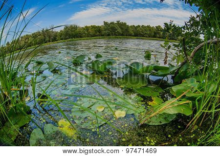 lake with water lilies pond nature landscape on background of bl