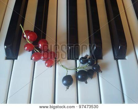 Currants on piano keys