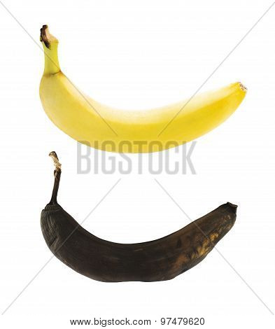 Spotless yellow and rotten bananas isolated