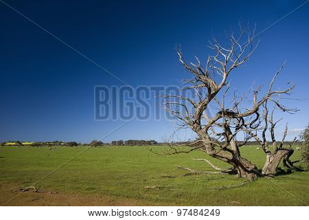 Grass field with bizarre dead tree