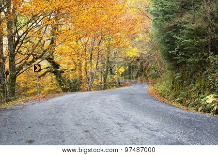 Road with colored trees in autumn season