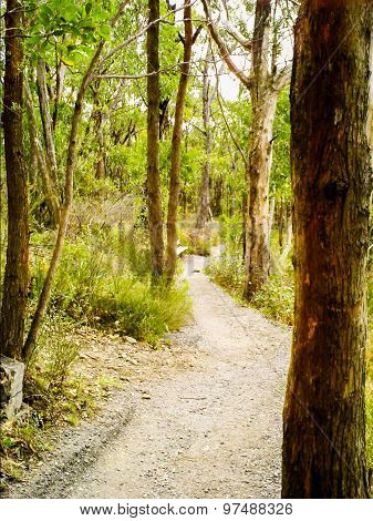 Path From Mt Lofty To Cleland Wildlife Park