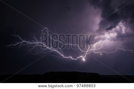 Elegant Lightning Tree