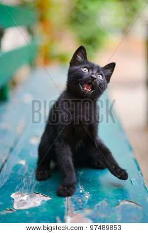 Black cute kitten on a green park bench