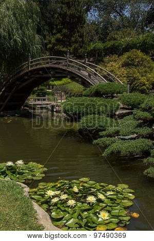 Japanese garden bridge and pond