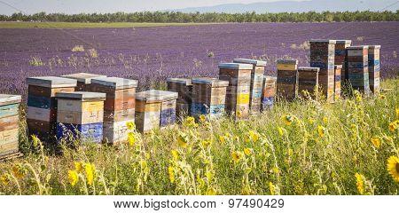 Beehives Lavender