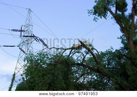 Damaged Tree After Storm And High Voltage Energy Pole