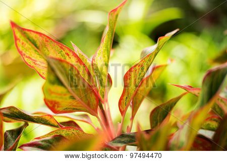 Closeup Of Colorful Leaves Of Plants In The Garden