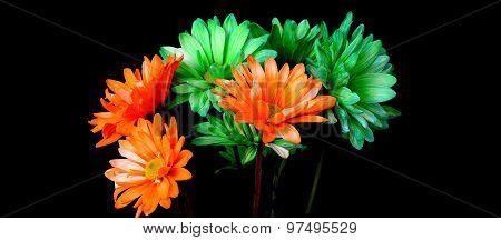 Green And Orange Daisy