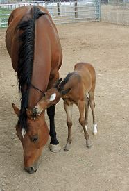 picture of colt  - A frisky colt biting on it