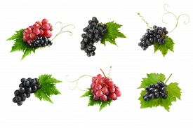 pic of grape  - Black grapes and Red grapes isolated on white background  - JPG