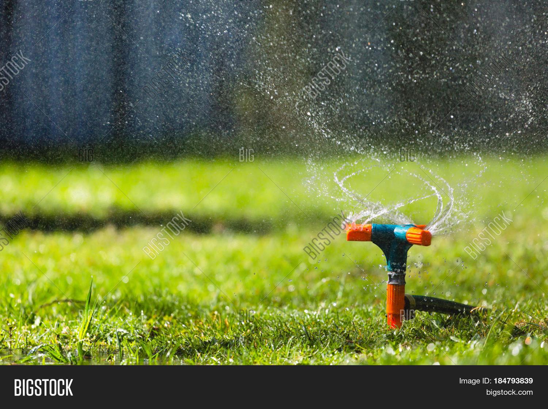 Garden Sprinkler Watering Grass Image Photo Bigstock
