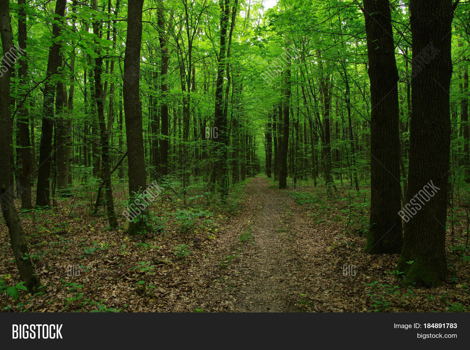 forest big and beautiful singles A forest is a large area dominated by trees hundreds of more precise definitions of forest are used throughout the world, incorporating factors such as tree density, tree height, land use, legal standing and ecological function.