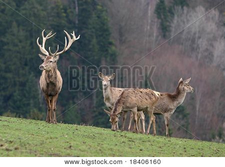 group of deer on autumn background