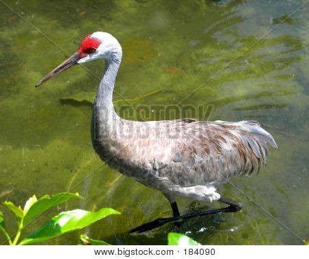 Tropical Bird Walking