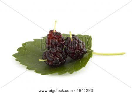 Three Mulberry Berries