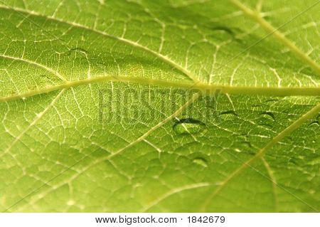 Grape Leaf Detail.