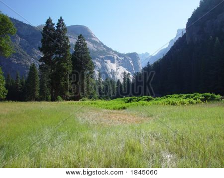 High Mountain Meadow